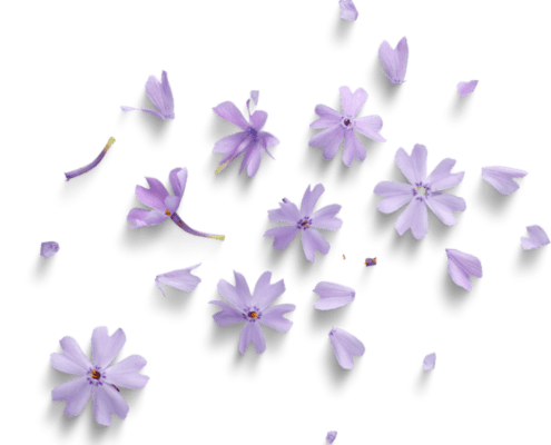 ' title='bg-paarse-bloemen' height=